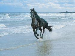 Horse Galloping on Beach